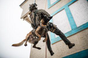 K) Training Mann sowie Hund beim Abseilen
